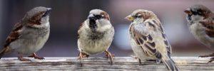 uccellini fedeli e chiari